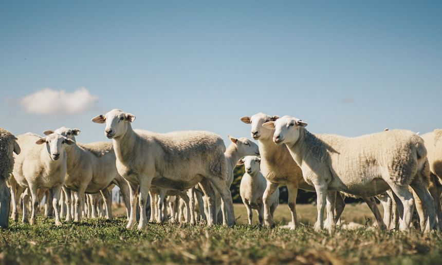 Using technology to transform the whole wool-growing and selling cycle